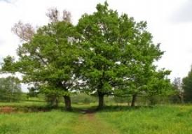 3 bomen- 3 dromen