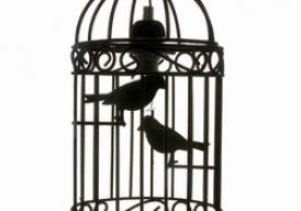 Het voorbeeld van de vogelkooi